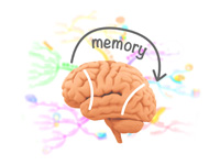 Mind Mapping for Memory